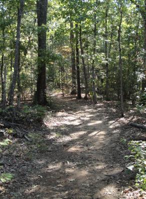 forestpath2